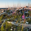 Stock Photo: Fireweed growing on dead logs