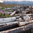 Stock Photo: Dead logs