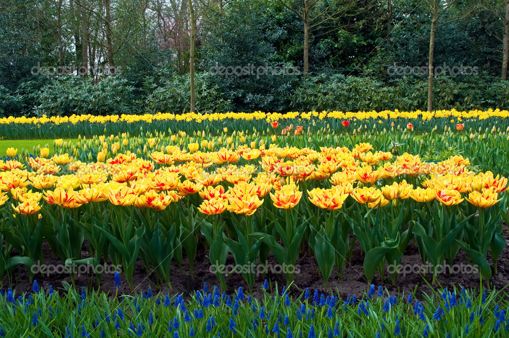 Keukenhof Gardens, Lisse, Netherlands . — Stock Photo #5531723