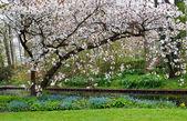 Apple blossom . — Stock Photo