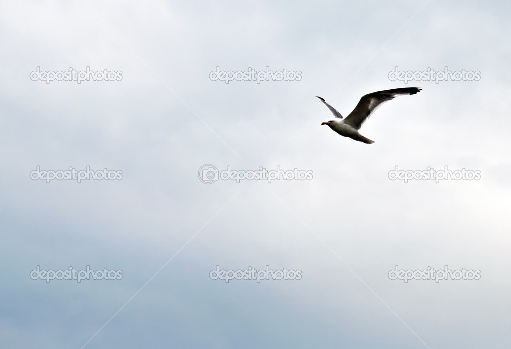 Seagull on the background of the cloudy sky.  Stock Photo #6550801