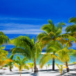 Palm trees on an amazing beach front — Stock Photo