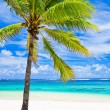 Stock Photo: Single palm tree overlooking amazing lagoon