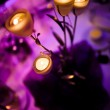 Romantic centerpiece with candles — Stock Photo