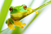 Small green tree frog holding on the palm tree — Stock Photo