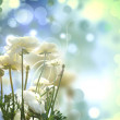 Stock Photo: Decor Floral Bubbles Background