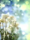 Decor Floral Bubbles Background — Stock Photo