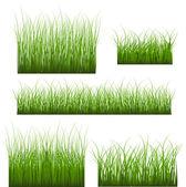 Vector Set Of Green Grass — Stock Vector