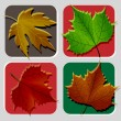 Isolated Leafs Illustration Set - Stock Vector