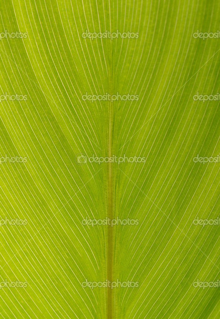 Background of the green palm leaf — Stock Photo #6372968