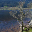 Stock Photo: Loch Eck