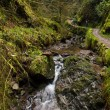 Puck's Glen — Stock Photo