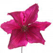 Stock Photo: Clematis