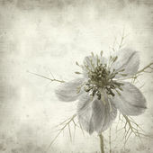 Textured old paper background with nigella — Stockfoto