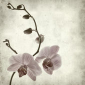 Textured old paper background with phalaenopsis; — Stock Photo