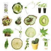 Green collection (green objects isolated on white) — Stock Photo