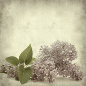 Textured old paper background with lilac branch — Stock Photo