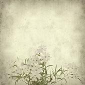 Vecchio sfondo di carta con phlox subulata — Foto Stock
