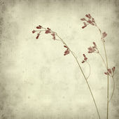 Textured old paper background with heuchera — Stock Photo