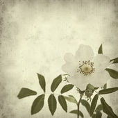 Old paper background with dog rose (rosa canina) — Stock Photo