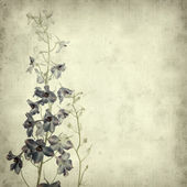 Textured old paper background with delphinium flower spike — Stock Photo