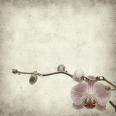 Textured old paper background with pink phaleonopsis orchid flow — Stock Photo