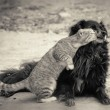 Cat kissing dog - Stock Photo