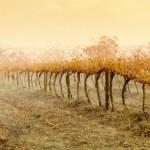 Vineyard Rain — Stock Photo