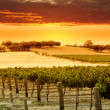 Vineyard Sunset - Stock Photo