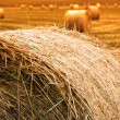 Haybale Sunset - Stock Photo