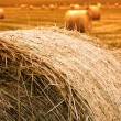 Royalty-Free Stock Photo: Haybale Sunset