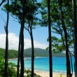 Tropical Tall Trees - Stock Photo