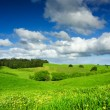 Green Field — Foto de stock #5483843