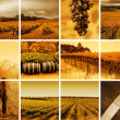 Stock Photo: Wine Montage