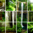 Rainforest Montage — Stockfoto