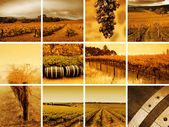 Wine Montage — Stock Photo