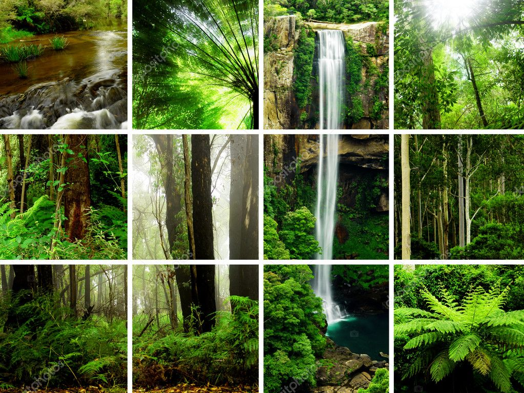 Rainforest Images  Stock Photo #5484523