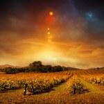 Autumn Vineyard Sunset — Stock Photo
