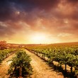 Sunset Vineyard - Stock Photo