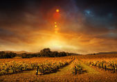 Autumn Vineyard Sunset — Stock Photo