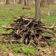 Pile of firewood — Stock Photo #5481816