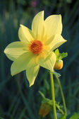 Close-up natáčení žlutý květ — Stock fotografie
