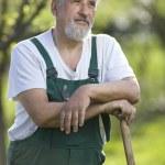 Portrait of a senior man gardening in his garden — Stock Photo #6148593