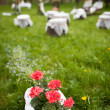 Splendid wedding venue - blossoming orchard on the 1st of May — Stock Photo #6149071
