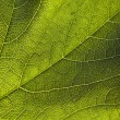 Green leaf close-up — Stock Photo #6149686