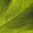 Green leaf close-up — Stock Photo