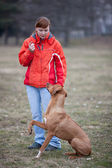 Master and her obedient (rhodesian ridgeback) dog — Foto Stock