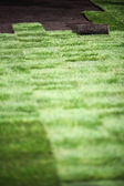 New lawn being spread — Stock Photo