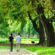 Park in a city with green trees - Stock Photo