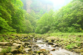 Landscape with mountain stream in forest of Zhangjiajie — Stock Photo